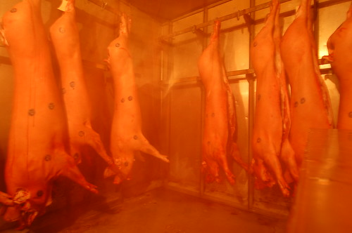 Skylight Inn: 3-Day Hog Supply (LBRDY09) | by Rob Bellinger