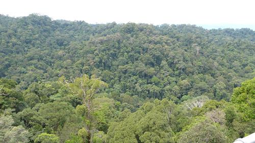 Thu, 03/13/2008 - 11:10 - View over the steep ridges of Kuala Belalong. Credit: CTFS