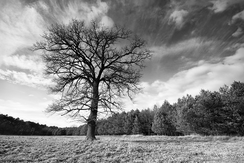 wood autumn sky bw cloud nature forest landscape geotagged oak herbst natur feld wiese himmel wolken filter single area oaktree landschaft kiefer wald brandenburg baum singletree acre acker eiche 10mm weitwinkel cokin einzelbaum gottsdorf sigma1020mmf456exdchsm einzeln d80 121m gnd4 nutheurstromtal geo:lat=5211652 frankenfelde geo:lon=13102591