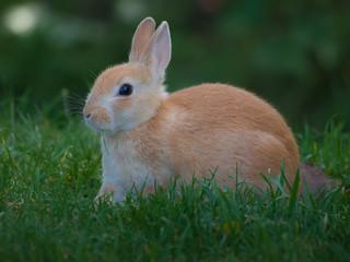 Bunny Rabbit | by wwarby