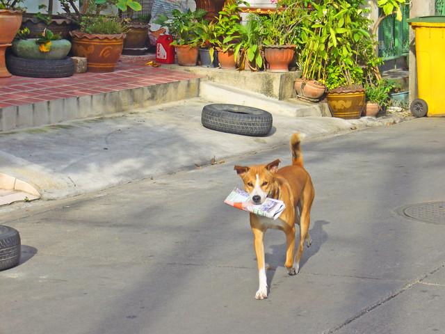 Dog with a job in Ratchada Soi 10, Bangkok