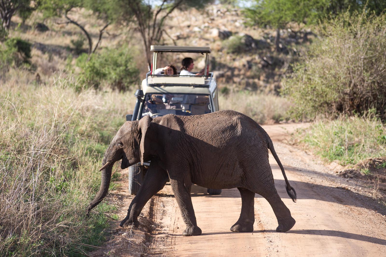 photo of elephant and tourists