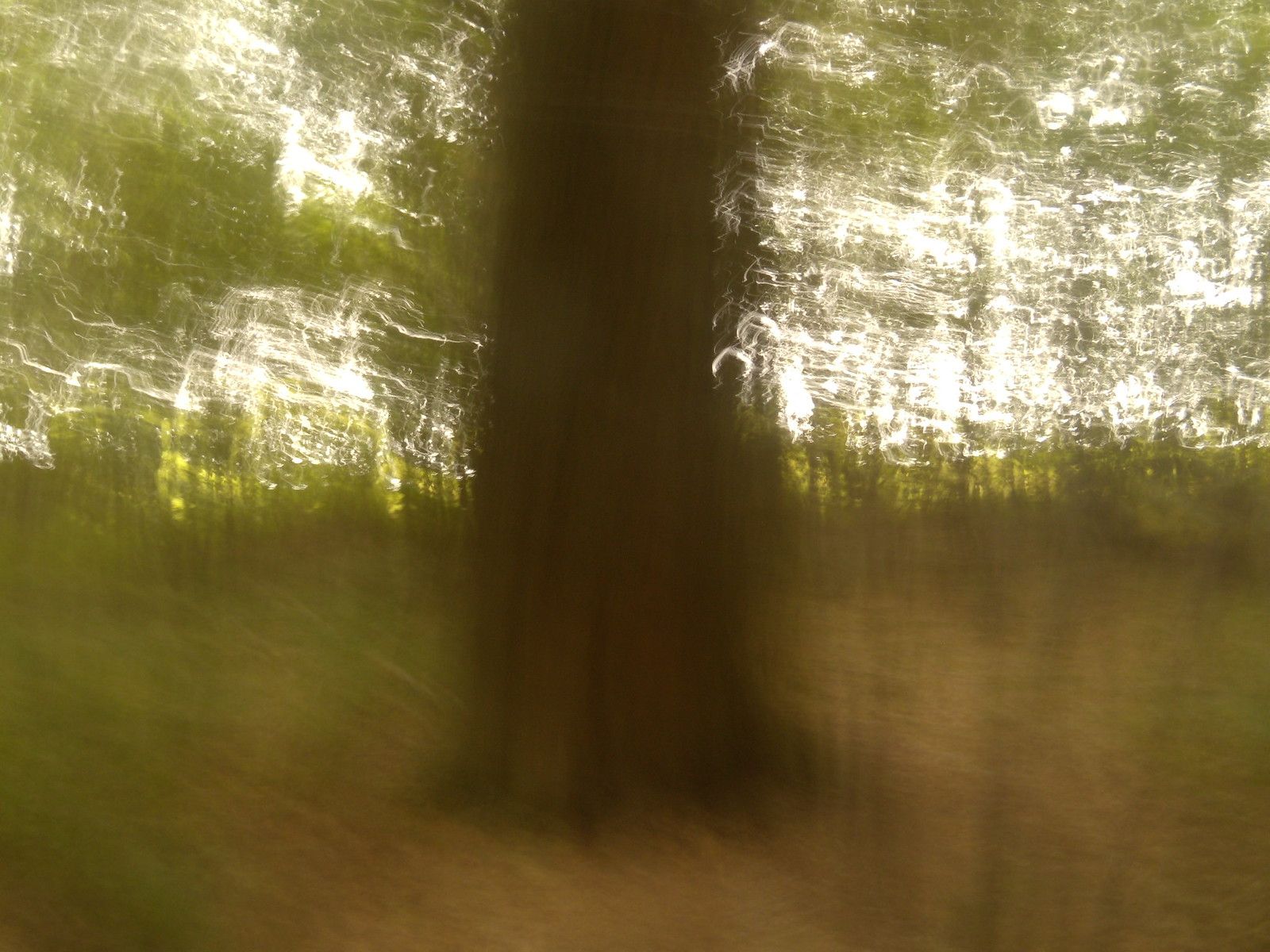 Tree in a wood Hassocks to Brighton