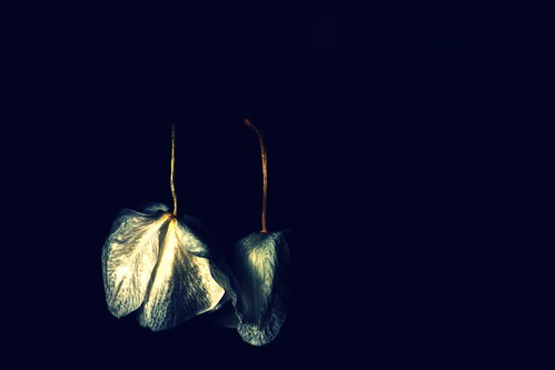 white plant orchid flower dead mac flora wilted wilting abigfave reddin edgedonkey