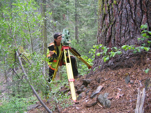 Tue, 06/16/2009 - 16:43 - The California Land Surveyor's Association helped with the establishment of the YFDP 20 m grid.  John Knox, survey crew chief with the California Department of Transportation surveys around an old-growth Pinus lambertiana. A total of seven professional surveyors volunteered their time and expertise.  Photo: Molly Barth. June 2009. Credit: Jim Lutz