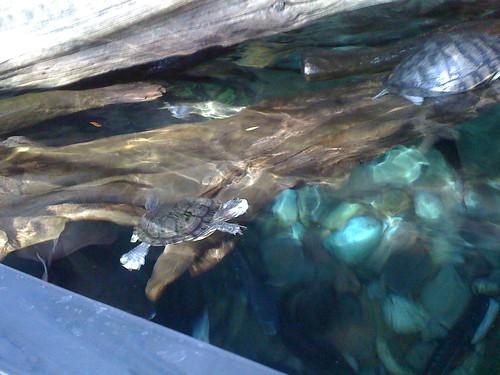 Denver Aquarium | by 13jorn