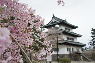 Hirosaki castle in cherry blossom festival season   by yisris