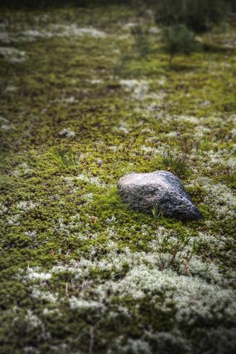 grass rock photoshop canon moss zen isolation hdr canonefs1785mm