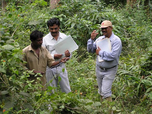 Wed, 10/19/2005 - 09:39 - Recensus work in 50-ha plot. ..., Suresh and Dattaraja. Credit: CTFS