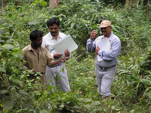 Wed, 10/19/2005 - 09:39 - Recensus work in 50-ha plot. ..., Suresh and Dattaraja. Credit: CTFS