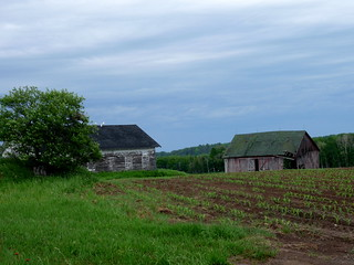 Old barns | by yooperann
