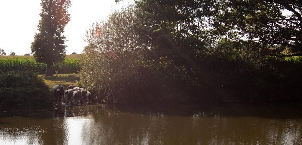 Canal de la Vilaine (1 sur 10)