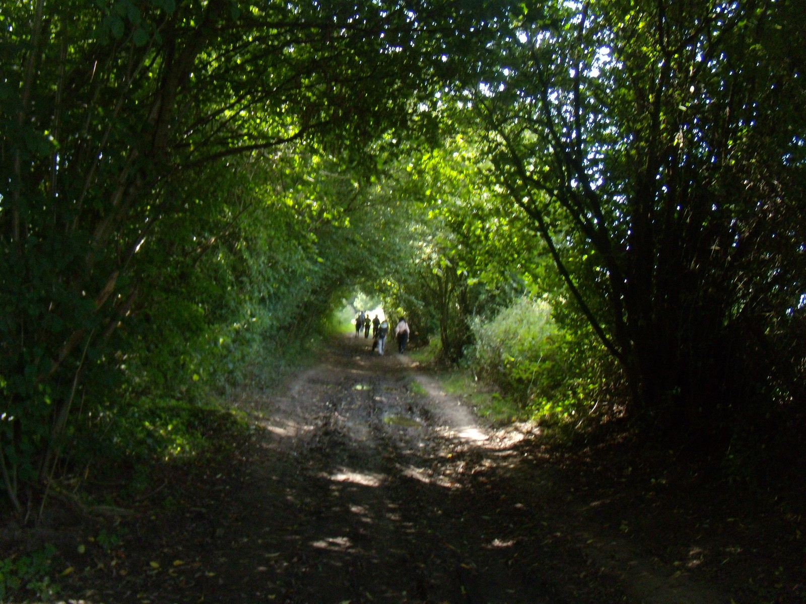 Woodland path Cowden to Hever