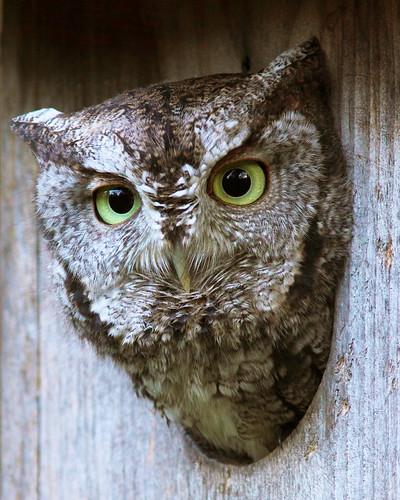kh0831 town avianexcellence birdperfect naturesfinest supershot specanimal specnature naturethroughthelens birdphoto getty bird xplr 111 animalportrait thousandplus nj