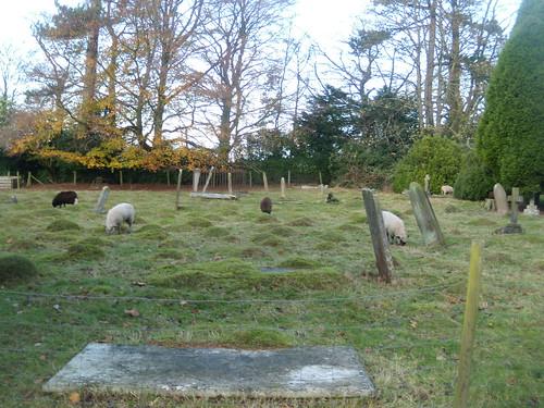 Sheep in churchyard Knockholt Circular