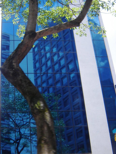 árvore urbana