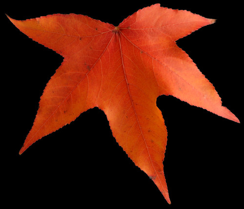 Automn Leaf | by soa2002