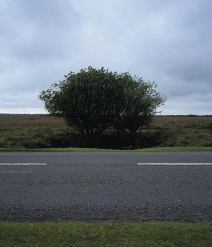 Lone flora