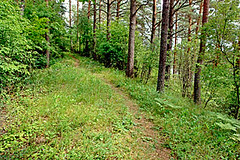 Grebla-kalns2-19jul08
