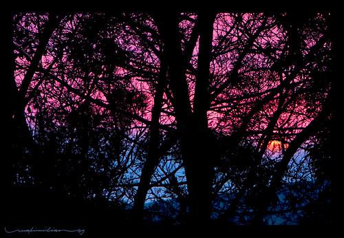 sunset sky cloud sun tree silhouette hawaii twilight waimea bigisland bigisle