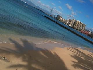 Palms on Waikiki | by jeremiah_owyang