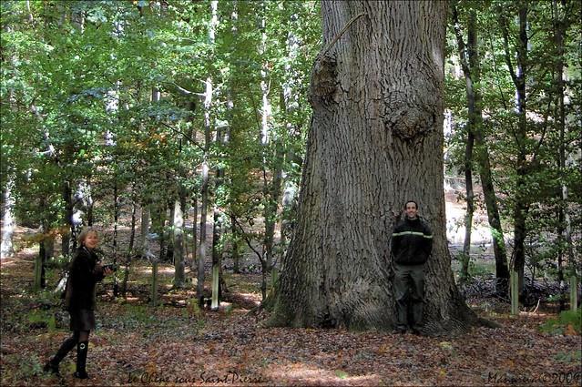 Le Chêne sous Saint-Pierre