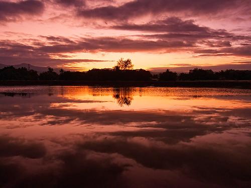 nature sunrise reflections river landscape lumix dawn panasonic malaysia kotakinabalu sabah sungai firstlight riceworld likas subuh topseven anawesomeshot absolutelystunningscapes fz28 ishafizan sunporn