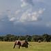 Image: Ellies Under a Moody Sky