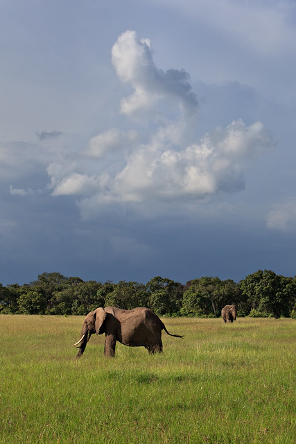 Previous: Ellies Under a Moody Sky