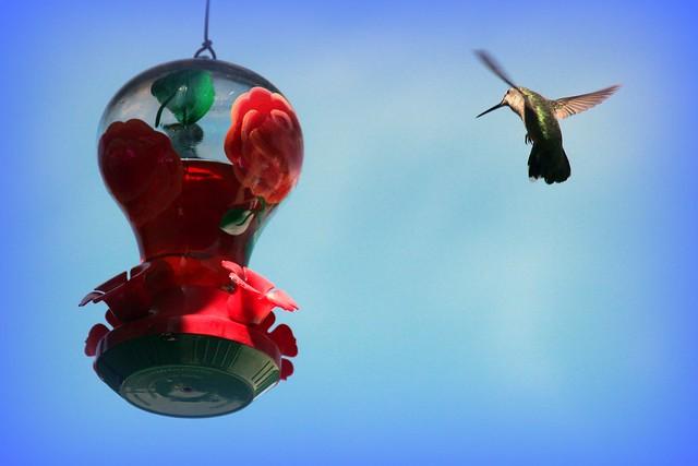 free bird...