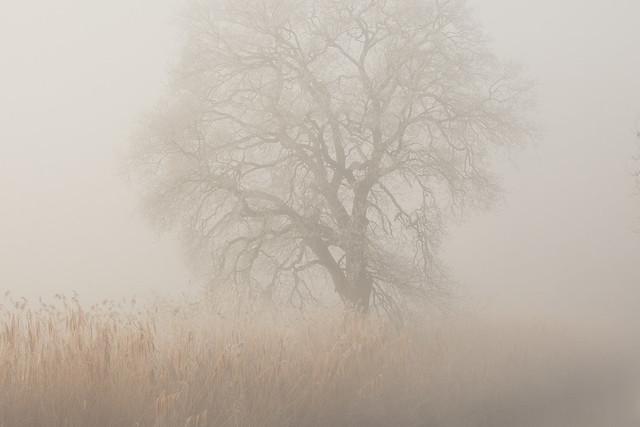 A Foggy Winter Day 2