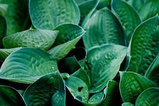 Sea of Leaves | by J e n s