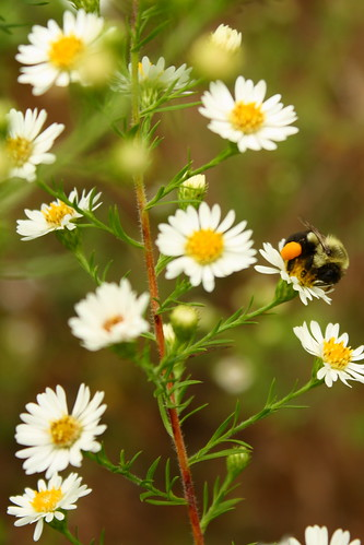 flowers autumn orange white yellow bees insects wasps stingers