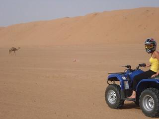 Muscat 2008 (clos 172