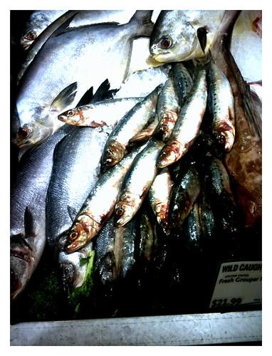 Fish head surprise by swanksalot