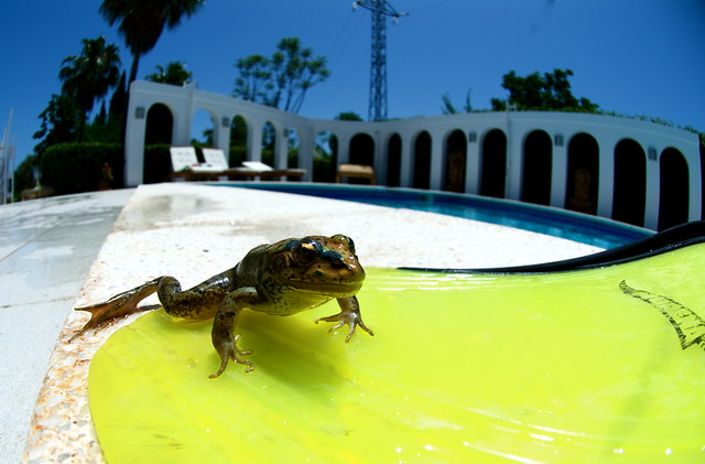 frog flipper