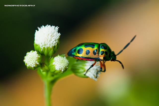 beetle's colorful life i
