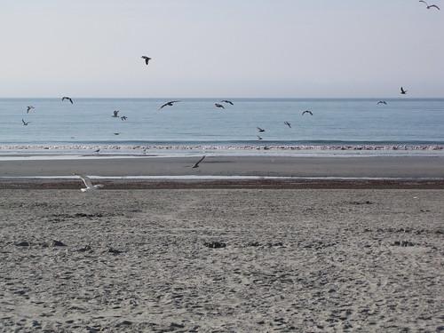 seagulls rhodeisland newport eastonsbeach