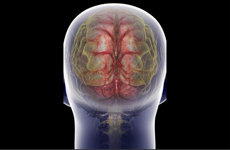 brain-spinal-cord-73564950-sw