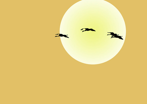 Sand Hill Cranes over Homer, Alaska