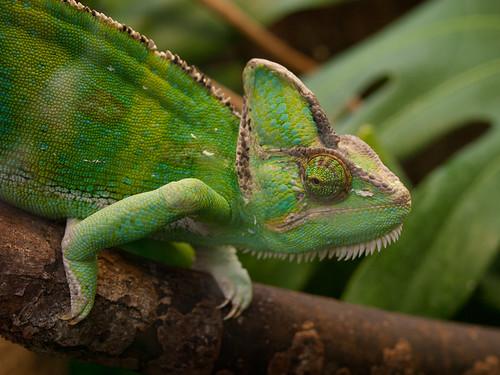 Chameleon   by wwarby