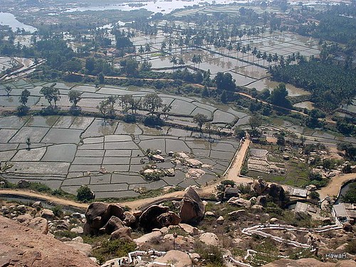 Village rice farming in Hampi, India | by everlutionary