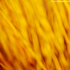 A golden abstract with some yellow wicker branches | by FrenchLandscapes