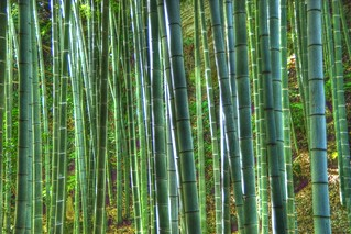 bamboo | by twicepix