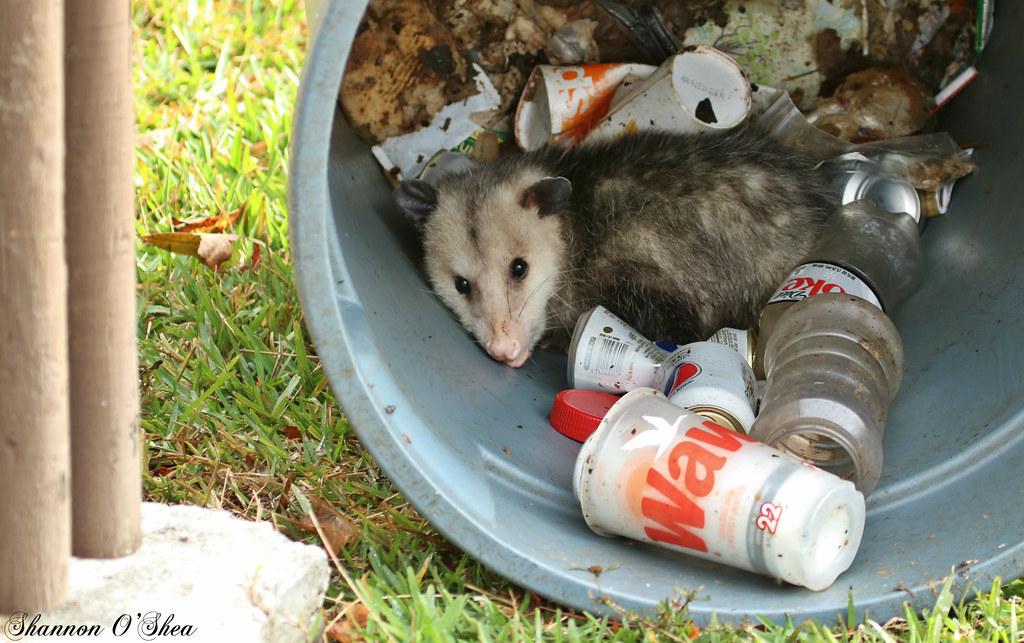 Omy Opossums