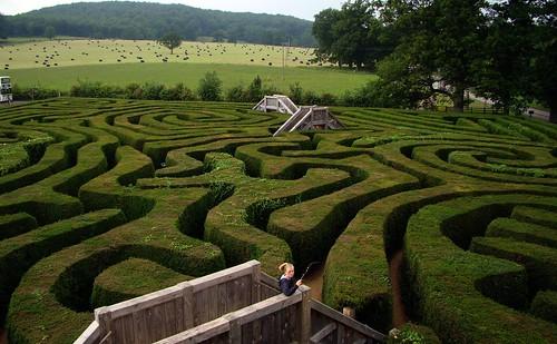 Longleat Maze   by joncandy