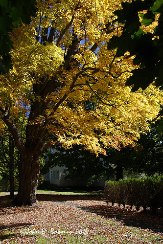october fallcolor connecticut newengland 2007 litchfield october2007