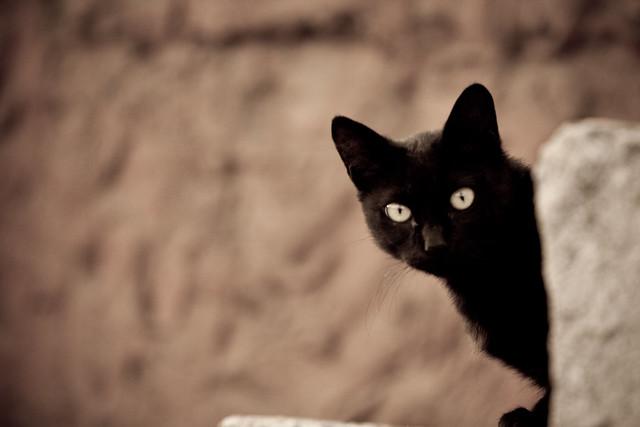 shyblackcat