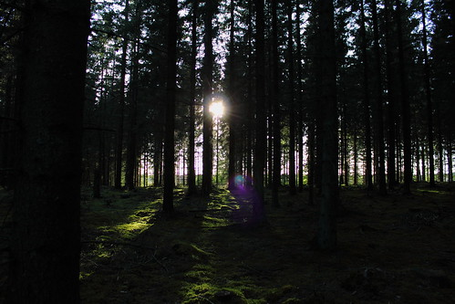 trees sunshine forest sunflare