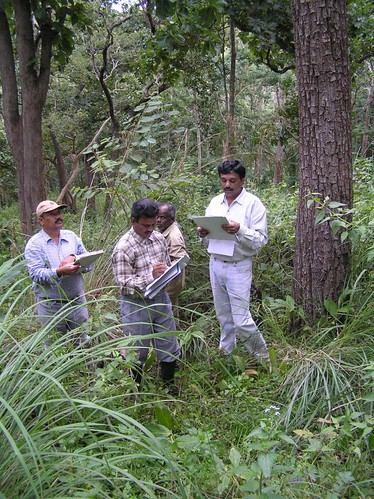 Wed, 10/19/2005 - 07:57 - Recensus work in 50-ha plot. Dattaraja (left) and Suresh (right) leading the census. Credit: CTFS